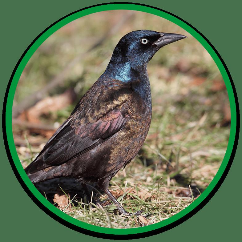 Humane Bird Removal Service
