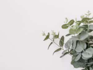 eucalyptus, natural pest control