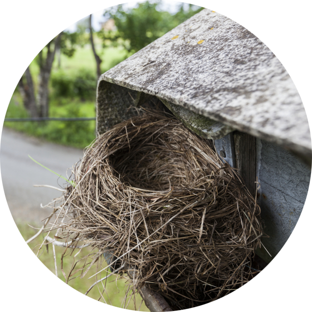 Small bird's nest in eavestrough of Burlington shed
